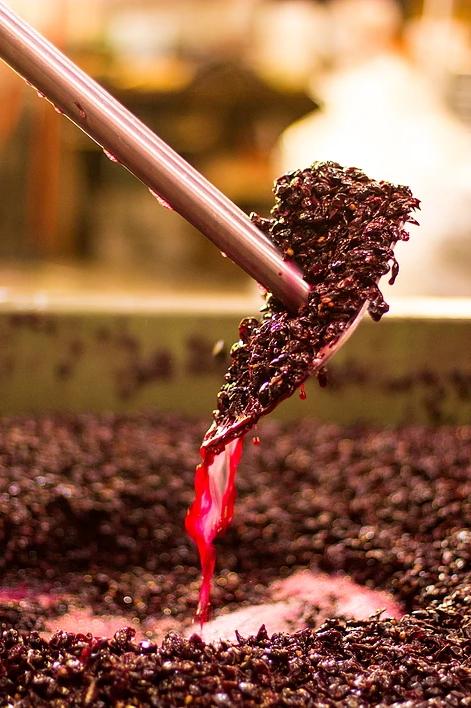 muljanje grozdja