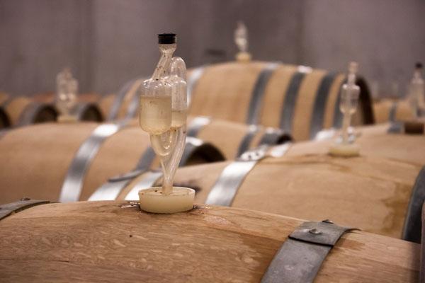 sazrevanje vina